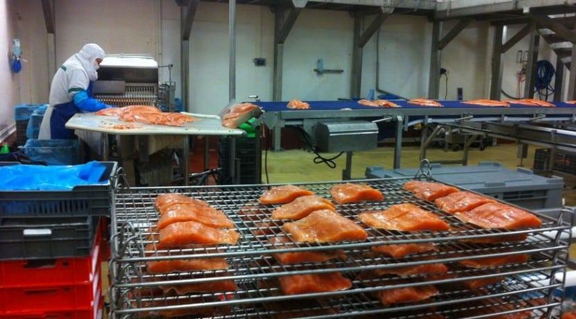 Delpierre Wisches Alsace agroalimentaire saumon fumé usine location