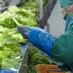 Agrafresh usine agroalimentaire nord legumes pas-de-calais