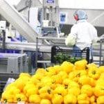 Délivert agroalimentaire usine legumes bretagne morbihan