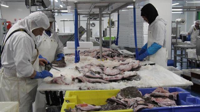 Océalliance Le COz marée atelier agroalimentaire finistere bretagne usine mareyage