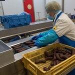 Brient usine agroalimentaire Charcuterie agrial bretagne ille&vilaine