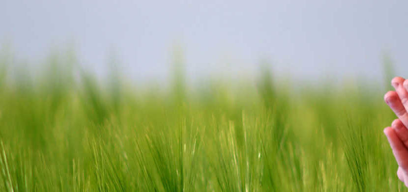 Galliance Terrena usine agroalimentaire investissement