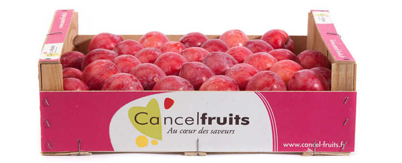 Cancel Fruits investissement agroalimentaire usine logistique Castelsarrasin