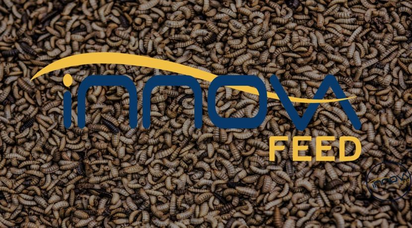 Innovafeed agroalimentaire proteine usine investissement hauts de france somme