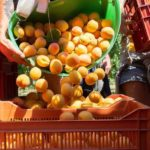 Primeurs agroalimentaire Canavese Salade2fruits investissement fusions-acquisitions plateforme logistique